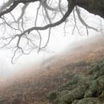 秋のツリー — ストック写真