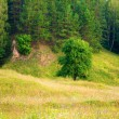 Meadow, tree, forest — Stockfoto