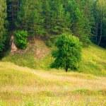 草甸、 树、 森林 — 图库照片