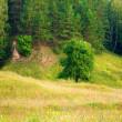 Prado, árbol, bosque — Foto de Stock