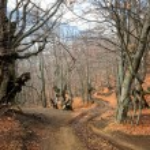 jesień las drogi — Zdjęcie stockowe #13852273