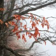 Stock Photo: Autumn tree branches in the fog