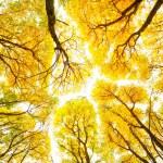 herfst bomen patroon — Stockfoto
