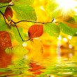 Autumn branch leaves reflected in water — Stock Photo