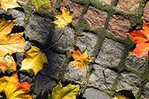 Autumn leaves on walkway — Stock Photo