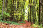 Autumn forest path — Stock Photo