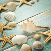 Shells on vintage shabby wood — Stock Photo