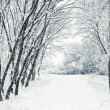 Winter scene — Stock Photo #16918049
