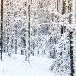 Winter scene — Stock Photo #16918157