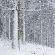 Winter forest — Stock Photo #16918263