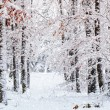Winter scene — Stock Photo #16918385