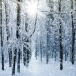 Winter forest — Stock Photo #16918519