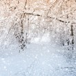Winter scene — Stock Photo #16918549