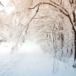 Winter scene — Stock Photo #16918597