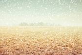 Winter veld — Stockfoto