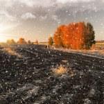 雪に覆われた田舎 — ストック写真