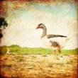Stock Photo: Retro background with goose