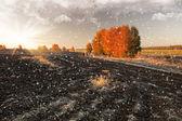 Campo nevado — Foto Stock