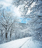 Winter scene with snowy road — Stock Photo