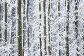 Trees in snow — Stock Photo