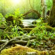 Stock Photo: Forest river