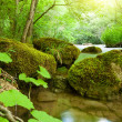 Forest river — Stock Photo