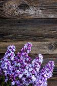 Lilac flowers — Stock fotografie