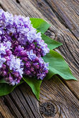 Lila bloemen — Stockfoto