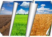 Agriculture fields collage — Stock Photo