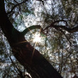 Sun Beams in the Tree — Stock Photo