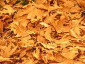 Background of Fallen Autumn Leaves — Stock Photo