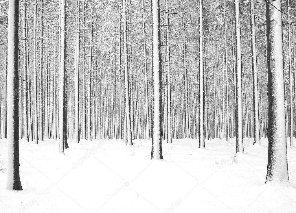 Forrest in cold winter and snow — Stock Photo #15169749
