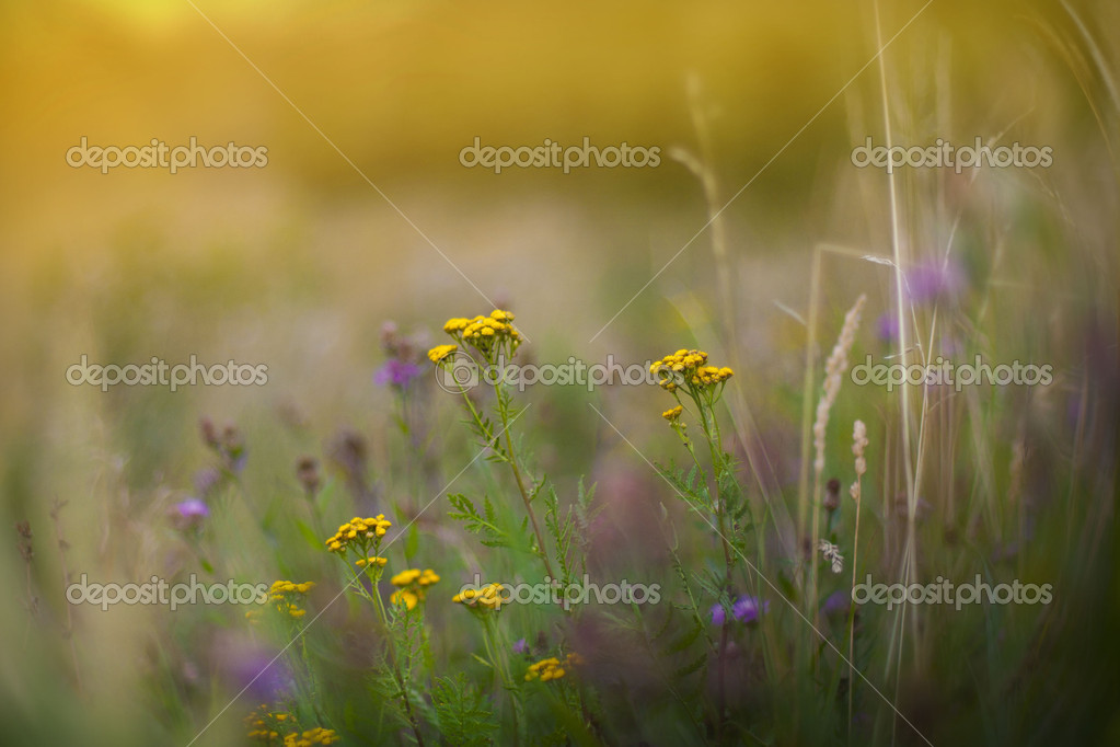 The photo is made in the summer under natural conditions. — Stockfoto #12199859