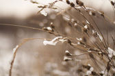 Grass in ices — Stock Photo