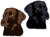 Chocolate and Black Labs — Stock Vector