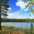 The lake in the wood — Stock Photo