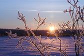 Winter in Siberia — Stock Photo