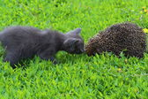 Kitten and hedgehog — Stock Photo