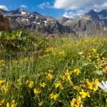 Alpine meadow — Stock Photo #13578208