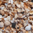 Background with broken sea shells. — Stock Photo
