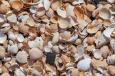 Background with broken sea shells. — Stock fotografie