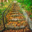 Old, overgrown vegetation, granite stairs — Stock Photo