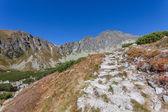 Beau sentier dans les montagnes de tatra — Photo