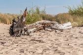 An old trunk in the sand — Stock Photo