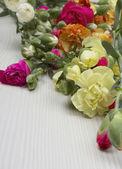 Nejlikor blommor, nära upp skott — Stockfoto