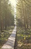 Las w październiku — Zdjęcie stockowe