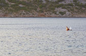 橙色蓝色水面上的浮标 — 图库照片