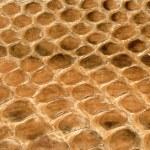 Постер, плакат: Brown reptile skin texture