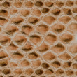 ������, ������: Background ofnatural reptile skin