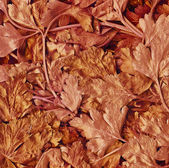 Background of red leaves — Stock Photo